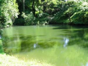 Parc du château de Lancheneil à 15 minutes de Laval en Mayenne